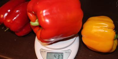 Как вырастить не очень крупные перцы?