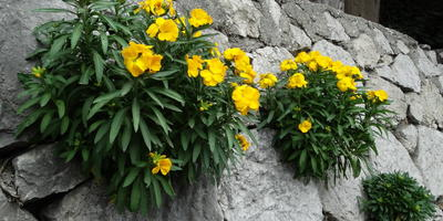 Пожалуйста, подскажите, что это за цветы на стене?