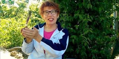 Лилия: видео о правильной подготовке посадочной ямы и высаживании
