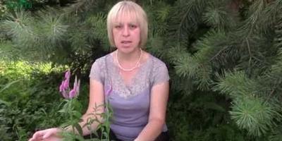 Сажаем веронику колосистую (колосковую) - вертикальный акцент цветника (видео)