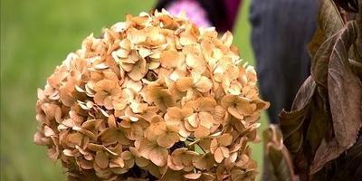 Как подготовить цветники к зиме (видео)