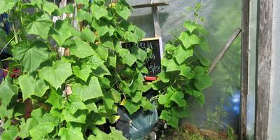 Выращивание в мешках: за и против (видео)