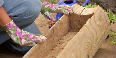 Как сделать мини-альпинарий в старом бревне (видео)