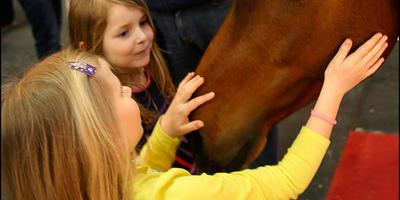 """""""Лошадь, природы созданье чудесное"""""""