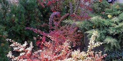 Краски октября