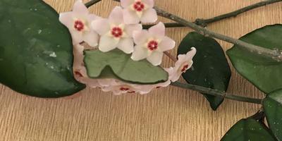 Помогите найти название комнатного растения