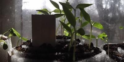 Упаковка от хлеба – удобная ёмкость-трансформер для рассады, растущая вместе с ней