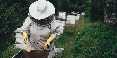 Про законы и чиновников, пчёл и природное земледелие