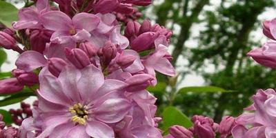 Майские праздники: может, сходим в Ботанический сад?