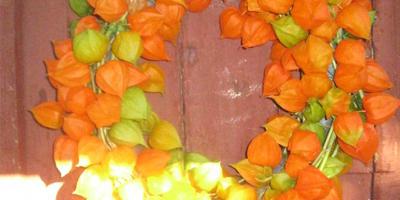 Осенние поделки №1. Венок из физалиса для украшения интерьера