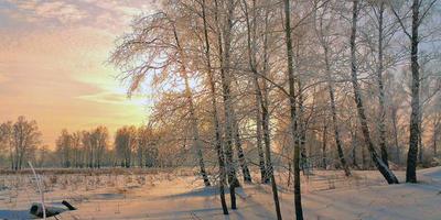 Зимнее многоцветье, солнышко постаралось
