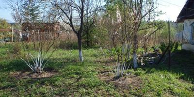 Мой огородик и плоды Земли