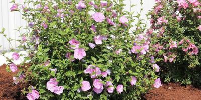 Помогите подобрать растения для миксбордера
