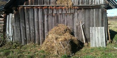 Легенда покоса, счастье и козы