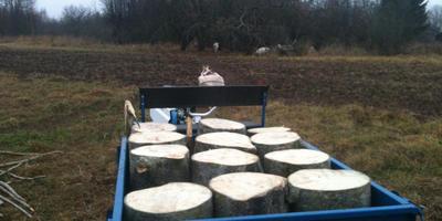 Мотоблок Нева и радость от содержания коз