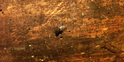Приз, козы и комары. И еще мухи с дождистыми дождями