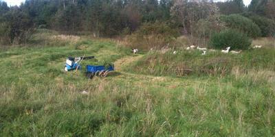 Подстилка для коз из болотной травы