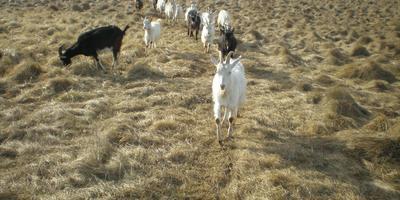 Новости о козлятах и марсоходе, а также ошибки и выводы