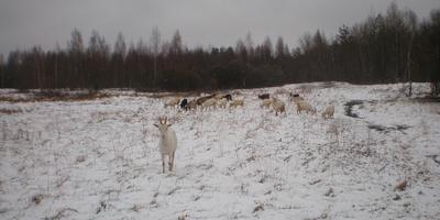 Внезапная погода, а также итоги козлячего сезона