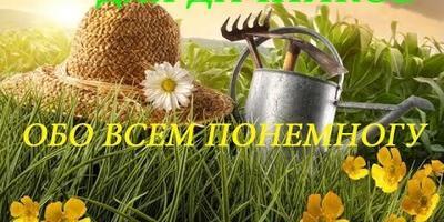 Сажаем корневой сельдерей на зелень