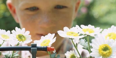 Микрокапельный полив: бережный уход за растениями