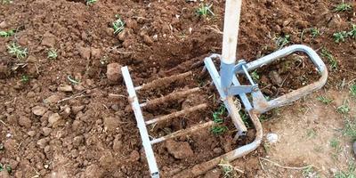Какие сидераты сеять весной. Не копать/Органическое земледелие