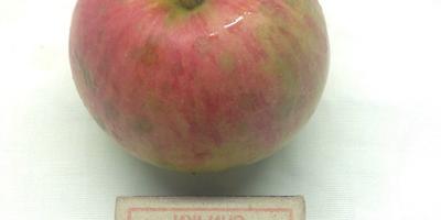 Помогите определить сорта яблок по фотографии
