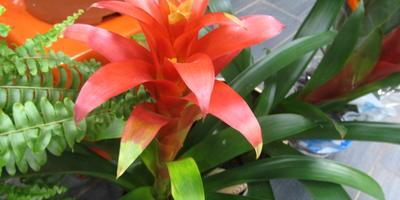 Красавицы из тропиков