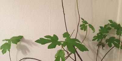 Подскажите, пожалуйста, что это за растение?
