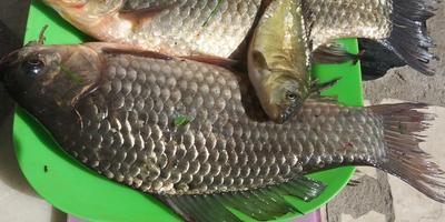 Ловись, рыбка, большая и маленькая