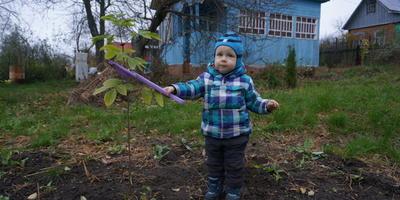Помогите узнать, что за деревце растет у нас на участке?