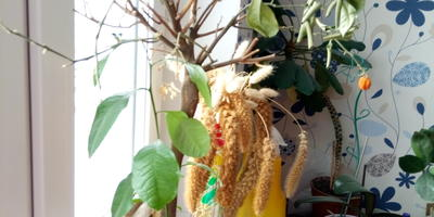 Как реанимировать мандариновое дерево?