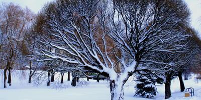 Зима в старом парке