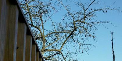 Как обезопасить свой сад от соседских больных слив, которые сыплются на наш участок?