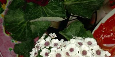 Помогите узнать название цветка. Как за ним ухаживать?
