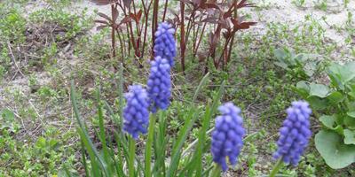 Что это за цветок? Можно ли его пересадить в другое место после цветения?