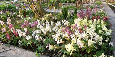 Рассказ о моем увлечении коллекционированием растений