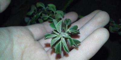 Подскажите, что это за растение и как за ним ухаживать?