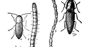 Что за черви в земле?