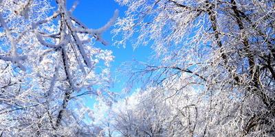 """Белым снегом всё покрыло: И деревья, и дома, Свищет ветер легкокрылый: """"Здравствуй, зимушка - зима!"""""""