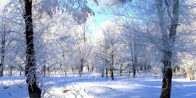 Её величество природа! Её величество зима! От синих красок небосвода Схожу тихонько я с ума......