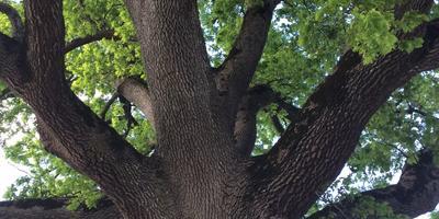 Дерево - символ