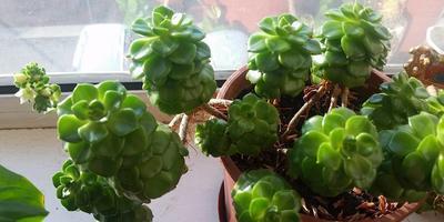 Скажите, пожалуйста, как называется это растение