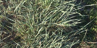 Подскажите, что за трава и как от неё избавиться?