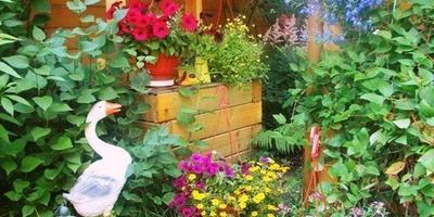 Если хотите жить счастливо - создайте свой сад