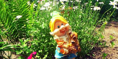 Мой сад у дома