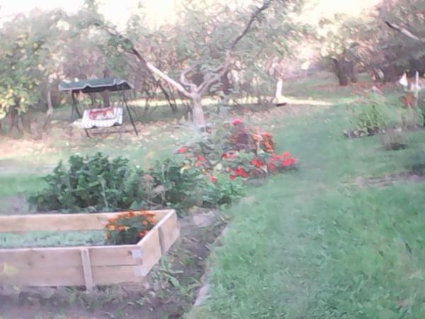 Последний день сентября на огороде.