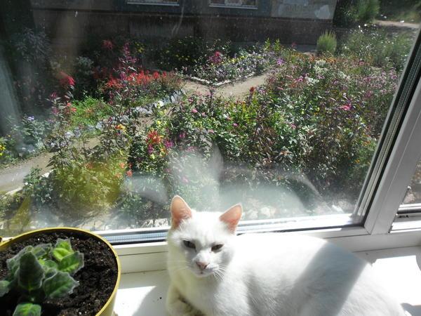 Это моя Зайка, любит красивый вид из окна (также как и я)