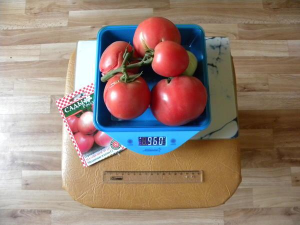 помидорная кисть