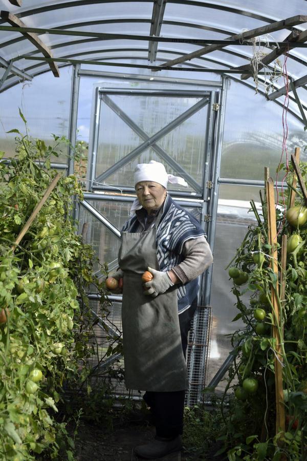 Мама в теплице с помидорами